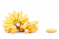 Lady Finger banana and  hand of golden bananas   on white background healthy Pisang Mas Banana fruit food isolated Royalty Free Stock Photo
