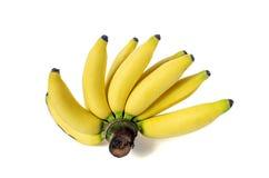Lady FInger Banana. Stock Photo