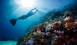 Lady freediver gliding underwater. Over vivid coral reef Royalty Free Stock Image