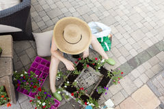 Lady gardener planting seedlings into a flowerpot Royalty Free Stock Photography