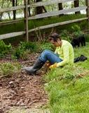 Lady gardener pulling up weeds in flowerbed stock image