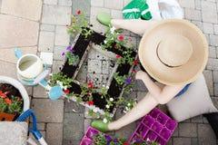 Lady gardener transplanting petunias Royalty Free Stock Image