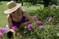 Lady Gardening Stock Photography
