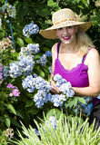 Lady Gardening In Sun Stock Image