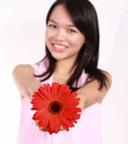 Lady with gerbera flower. Beautiful young lady with gerbera flower  on white background Stock Image
