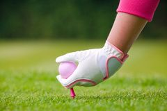 Lady golfer placing pink ball and tee into the ground. Lady golfer placing her pink ball and tee into the ground on a golf course Stock Photos