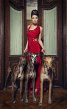 Lady with greyhounds Royalty Free Stock Photos