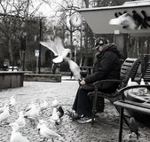 Lady with gulls Stock Photography