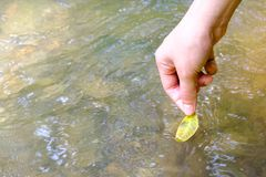 Lady hand release green leaf into the stream. With the vibration of water Royalty Free Stock Photography
