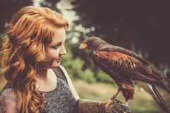 The Lady with the harris hawk. Wonderful harris hawk with a model Stock Photography