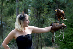 The Lady with the harris hawk. Wonderful harris hawk with a model Royalty Free Stock Photography