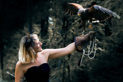 The Lady with the harris hawk. Wonderful harris hawk with a model Royalty Free Stock Photo