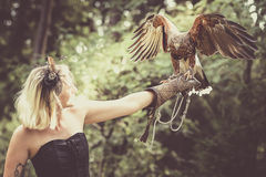 The Lady with the harris hawk. Wonderful harris hawk with a model Stock Photos
