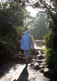 Lady hiker on path. Woman hiking down a backlit path on the island of Kauai in Hawaii stock image