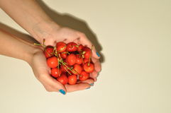 Lady holding red cherries Royalty Free Stock Photo