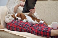 Lady holding tablet and cavalier dog. Woman in cozy home wear relaxing on sofa with a sleeping cavalier dog on her lap, holding tablet and reading Royalty Free Stock Photography