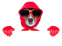 Lady housewife dog. Housewife dog with rubber gloves and a blue sponge Royalty Free Stock Photography