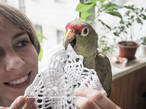 Lady knits and home parrot Amazon it helps. Love for Pets. A large green parrot Amazon helps in creativity. Close-up. Royalty Free Stock Image