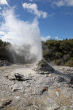 Lady Knox Geyser Rotorua New Zealand. Lady Knox Geyser in Rotorua New Zealand. This geyser is a popular attraction in the Rotorua thermal region in New Zealand Stock Images