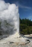 Lady Knox Geyser Stock Photography