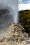 Lady Knox Geyser detail - New Zealand Royalty Free Stock Photography