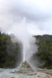 Lady Knox Geyser. Erupting in Rotorua, New Zealand Stock Photo
