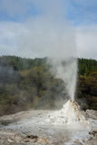 Lady Knox geyser erupting Stock Images