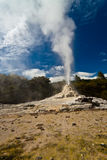 Lady Knox Geyser - New Zealand Royalty Free Stock Photos