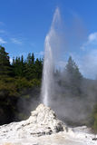 Lady Knox Geyser, New Zealand Royalty Free Stock Photos