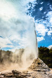 Lady Knox Geyser in New Zealand Royalty Free Stock Images