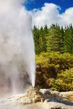 Lady Knox Geyser, New Zealand. Lady Knox Geyser in New Zealand Royalty Free Stock Images