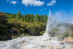 Lady Knox Geyser in New Zealand. Lady Knox Geyser erupting at Wai-O-Tapu  geothermal area in New Zealand Royalty Free Stock Photo