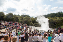 Lady Knox Geyser in New Zealand Stock Photography
