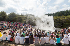 Lady Knox Geyser in New Zealand Stock Image