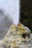 Lady Knox Geyser Royalty Free Stock Image