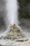 Lady Knox Geyser Stock Images
