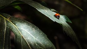 Lady in the Light. A ladybug gets her moment in the sun Stock Photos