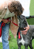 Lady and the Lurcher. Loving a dog is one the most natural thing to do and this lady gives hers a kiss after winning first prize at the local dog show royalty free stock images