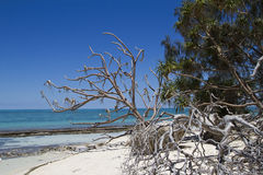Lady Musgrave Island. A Beach on the small tropical island in Queensland Australia. Lady Musgrave Island is part of the Great Barrier Reef and a natural paradise Royalty Free Stock Image