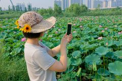 Lady in park. The pretty Chinese lady is shooting summer lotus pond stock photos