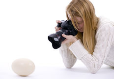 Lady Photographer Shooting Ostriches Egg Stock Photos