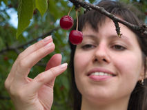 Lady picks cherry. Beautiful young lady picks red cherries from tree Stock Images