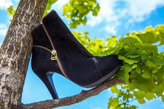 Lady`s shoe in a tree in Vancouver British Columbia stock photos
