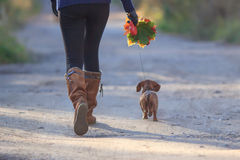Lady and sausage dog Royalty Free Stock Images