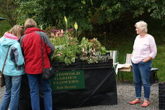 Lady selling plants. Vendor at plant sale with stall and plants for sale seller watching two potential buyers at her display Royalty Free Stock Images
