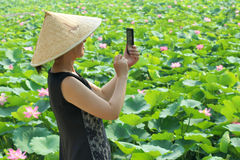 Lady is shooting. The pretty Chinese lady is shooting lotus with a mobile phone stock image