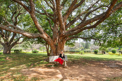 Lady sitting on a bench under big branches of green tree in city park. Stock Images