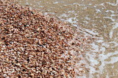 Lady slipper shells Stock Image
