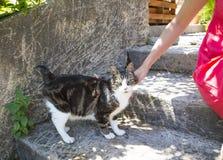 Lady softly cuddling cat. Harm of a lady softly cuddling cat Stock Photo