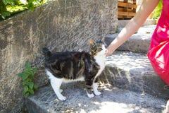 Lady softly cuddling cat. Harm of a lady softly cuddling cat Royalty Free Stock Photo